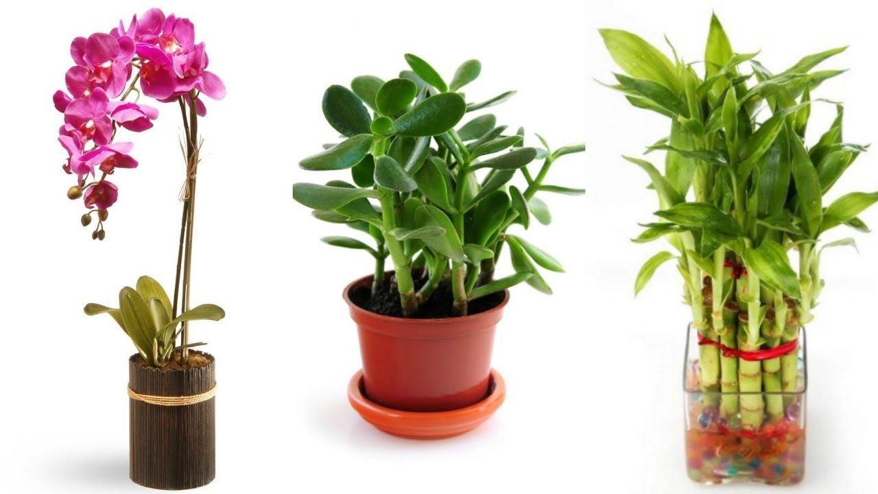 Good Fortune Plants